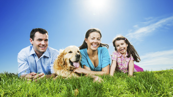 Pet 101   Facts About Heartworms